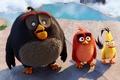 Картинка cinema, animation, Red, game, bird, steam, water, rocks, island, cartoon, movie, series, film, Angry Birds, ...