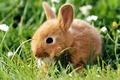 Картинка Кролик, малыш, пушистый
