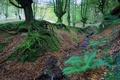 Картинка деревья, корни, осень, мох, лес