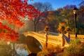 Картинка осень, солнце, деревья, цветы, мост, туман, парк, утро, фонари, речка