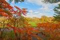Картинка листья, осень, парк, багрянец