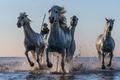 Картинка вода, лошади, кони, брызги