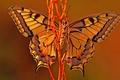Картинка красота, осень., Бабочка, лиана