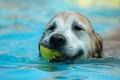Картинка Собака, вода, лист, плывет