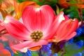 Картинка макро, лепестки, луг, цветок, сад