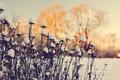 Картинка макро, сухостой, снег, зима