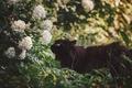 Картинка by Thunderi, цветы, черная кошка, природа