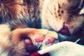 Картинка кошка, лапка, лапа, спит, кот