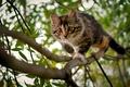 Картинка дерево, котенок, ветки