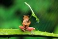 Картинка листок, лягушка, дождь, фон