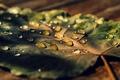 Картинка листья, вода, макро, роса, фон, widescreen, обои, капля, листик, wallpaper, листочек, широкоформатные, background, полноэкранные, HD ...