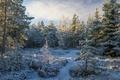 Картинка деревья, снег, лес, природа