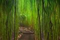 Картинка бамбук, тропинка, заросли