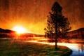 Картинка Река, дерево, солнце