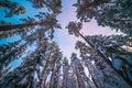 Картинка небо, снег, ствол, зима, деревья, сосна