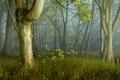 Картинка природа, лес, свет, деревья