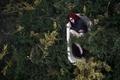 Картинка лес, девушка, ситуация, ванна