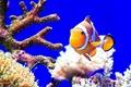 Картинка цвет, море, рыба, кораллы, океан