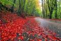 Картинка пейзаж, природа, дорога, деревья, листья, небо, осень, лес