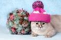 Картинка кошка, декорация, шапка, кот