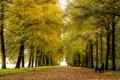 Картинка аллея, скамейки, парк, осень, листья