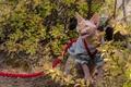 Картинка кошка, поводок, сфинкс, кусты, злюка, кот