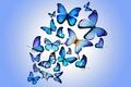Картинка design by Marika, бабочки, blue, colorful, butterflies