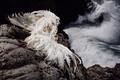 Картинка море, перья, девушка, птица, наряд, скалы, костюм