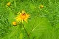 Картинка зелень, цветок, природа, пчела, widescreen, обои, wallpaper, широкоформатные, background, обои на рабочий стол, полноэкранные, HD ...