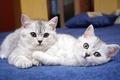 Картинка Кошки, коты, котята