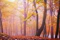 Картинка туман, деревья, осень, лес, листья