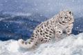 Картинка рендеринг, зима, снег, ирбис, котёнок, снежный барс