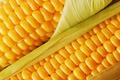 Картинка зеленый, злак, полезно, кукуруза, вкусно, еда, пища, желтый