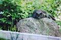 Картинка кошка, Кот, коты, cat, природа, мяу, пантера, черный, глаза, ленивый, кот на природе