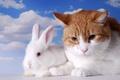 Картинка двое, два, обои от lolita777, недовольный, дружба врозь, кролик, белый, рыжий, пара, грызуны, кошки, альбинос, ...