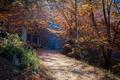 Картинка природа, осень, лес, тропа