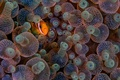 Картинка глаз, рыба, морская жизнь, актинии