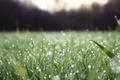 Картинка макро, природа, свежесть, вода, зелень, роса, трава, капли