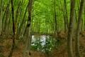 Картинка лес, листья, деревья, мост, пруд, отражение