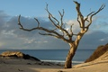 Картинка море, побережье, дерево
