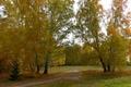 Картинка дорога, Берёзы, осень, лес, Сибирь