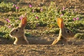 Картинка цветы, зайцы, нора