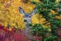 Картинка дерево, животное, ушки, олень