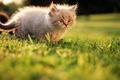 Картинка лето, котенок, трава