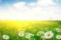 Картинка цветы, макро, ромашки, поле, сад, ромашка