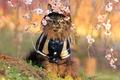 Картинка цветы, сакура, Кот, костюм, сидит