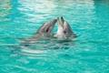 Картинка Дельфины, Пара, Игра, Любовь