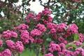 Картинка цветы, парк, дерево, весна