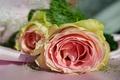 Картинка две, розы, розовые