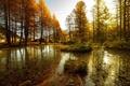 Картинка осень, лес, вода, озеро, Природа, тина, деревья. водоем